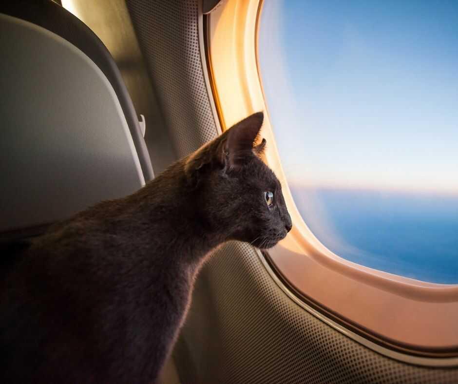 Перевозка собак и кошек самолетом