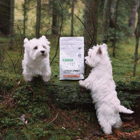 Сухой корм Natures Protection Superior Care Grain-Free White Dogs Adult Small & Mini Breeds Salmon