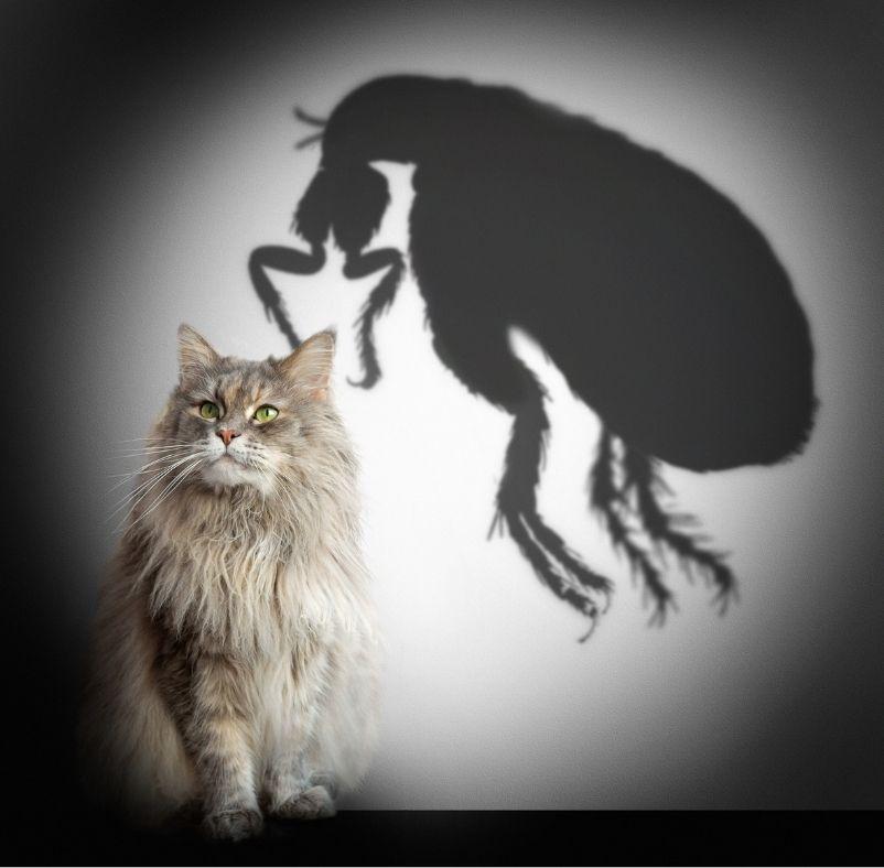 Меняется ли характер кошки после стерилизации