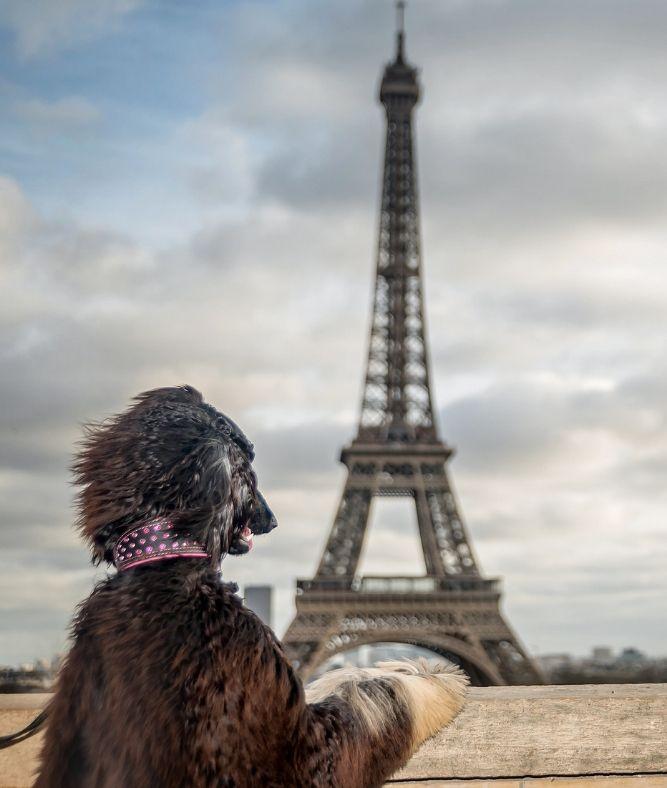 Путешествия с животными в другую страну